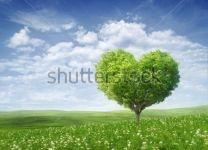 Фотообои Дерево-сердце
