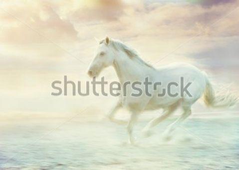 Фотообои Бегущий белый конь