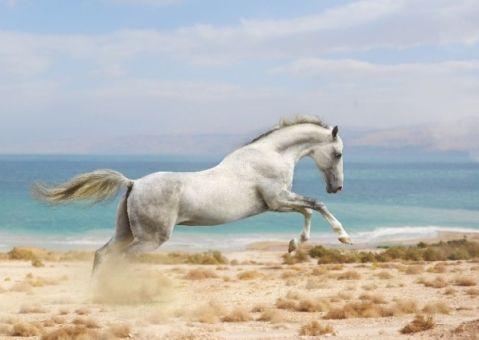 Фотообои Резвая лошадка